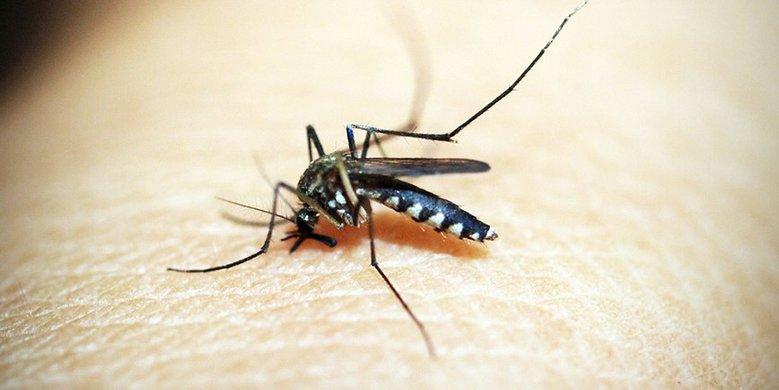 Feiten en fabels over het verjagen van muggen: wat werkt wel?